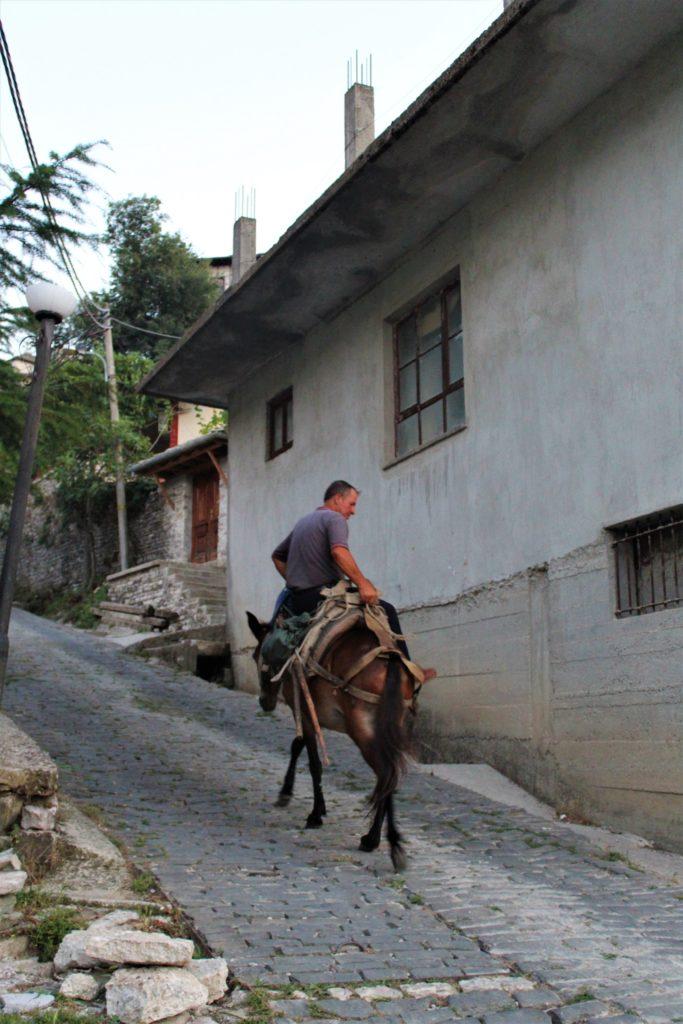 albania girocastro asino